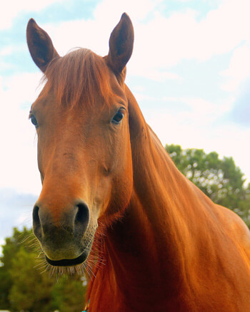 Equine Therapy horse Carmel