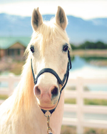 Equine Therapy horse Cloud