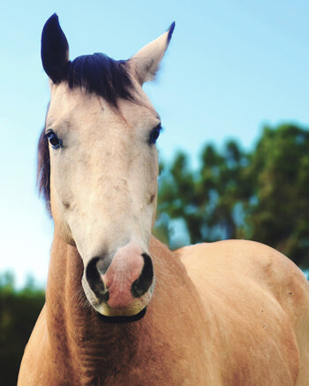 Equine Therapy horse Quigley